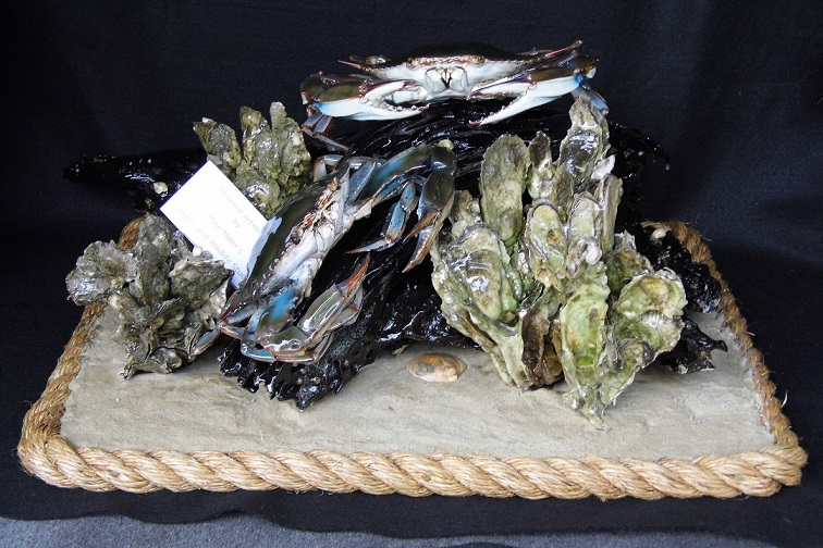 custom blue crab, fish, lobster, shrimp, taxidermy.  Chesapeake Bay home decor
