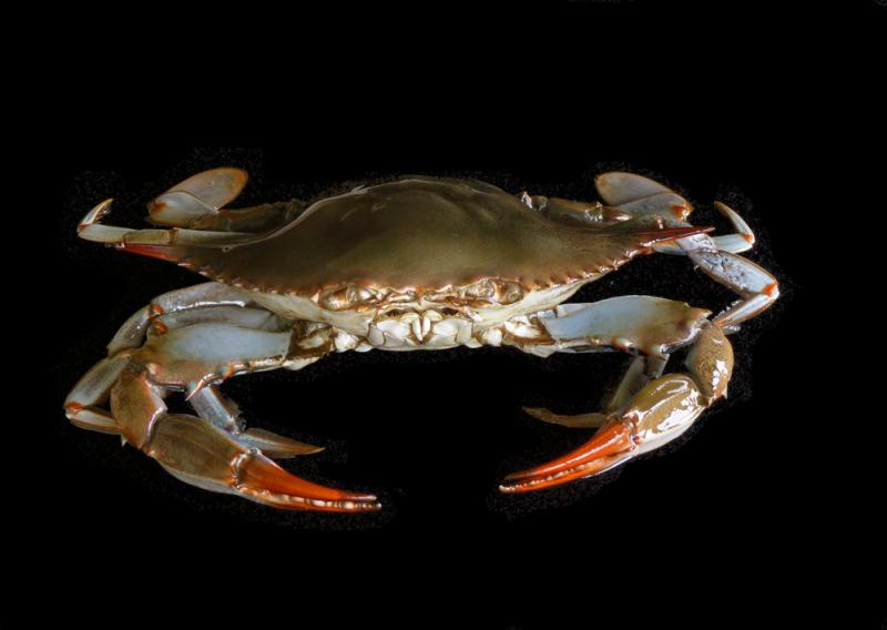 the best in authentic blue crab decor
